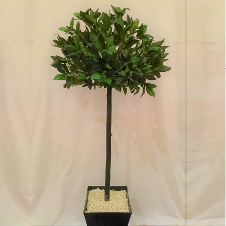 4ft Artificial Bay Tree in gloss black Pot